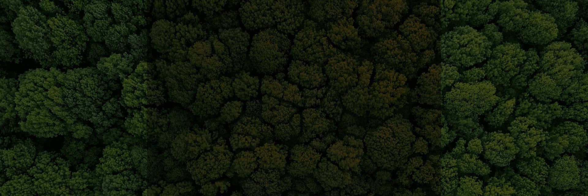 A forrest of green trees from above