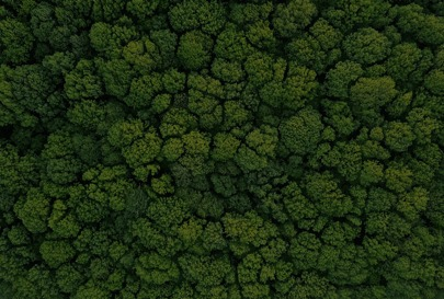 A forest from the sky of densely packed green trees