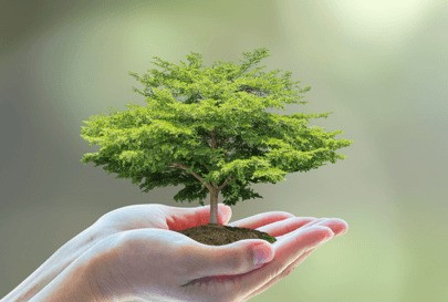 Studee's one million trees project logo